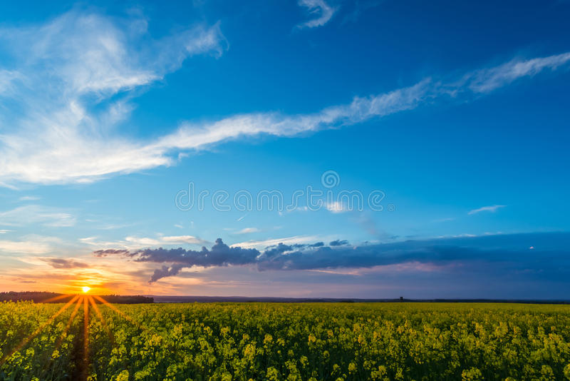 Vista sobre o campo da colza com flores amarelas no por do sol e na nuvem de tempestade fotos de stock royalty free