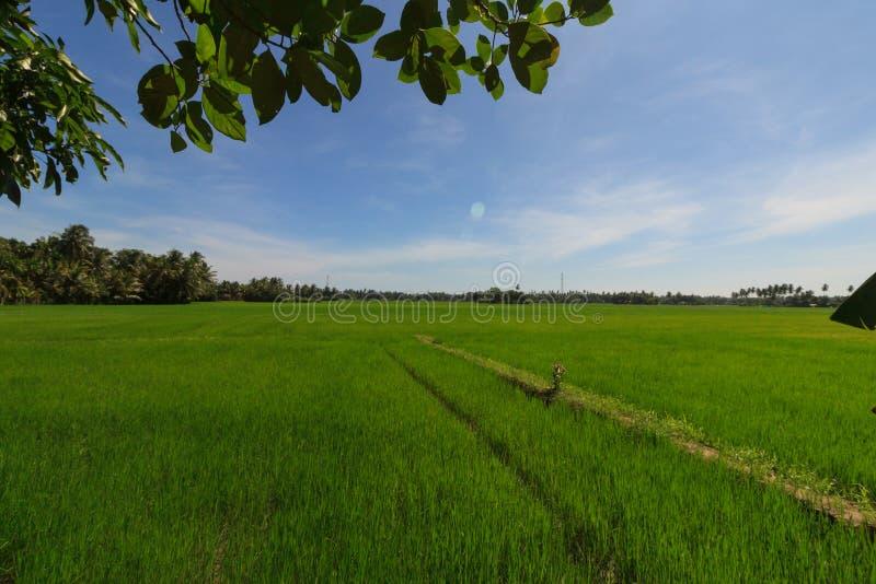 Vista sobre os campos do arroz na borda de Tissamaharama imagem de stock royalty free