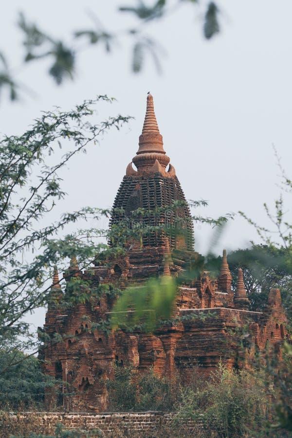 Vista sobre stupas e pagodes do complexo antigo do templo de Bagan durante a hora dourada do nascer do sol em Myanmar imagem de stock