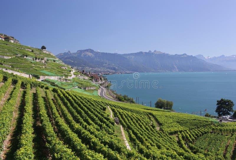 Vista sopra il lago Lemano dalle viti di Lavaux immagini stock libere da diritti