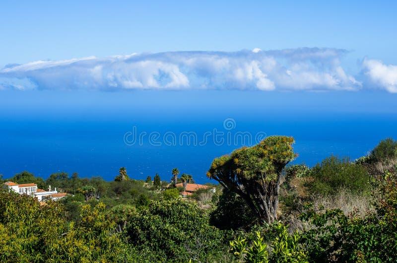 Vista sopra le dracene delle Canarie e le palme all'Oceano Atlantico nel nord-ovest di La Palma fotografia stock libera da diritti