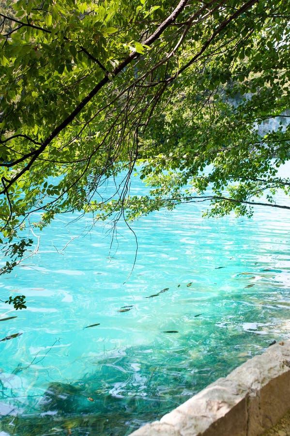Vista spettacolare di acqua cristallina con il pesce in Croazia fotografia stock
