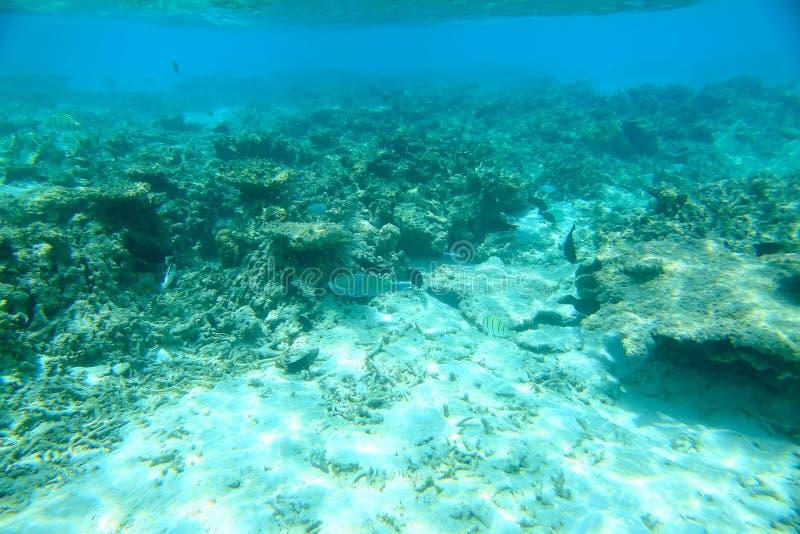 Vista splendida sulle barriere coralline e sulla sabbia bianca sotto acqua Mondo subacqueo Le Maldive, Oceano Indiano, immagini stock