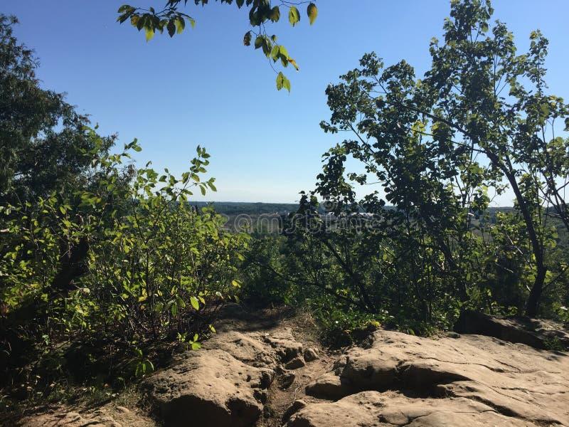Vista stupefacente dall'interno della foresta profonda fotografie stock