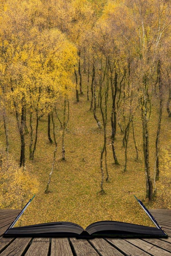 Vista stupefacente della foresta della betulla d'argento con le foglie dorate nella scena del paesaggio di Autumn Fall della gola fotografia stock libera da diritti