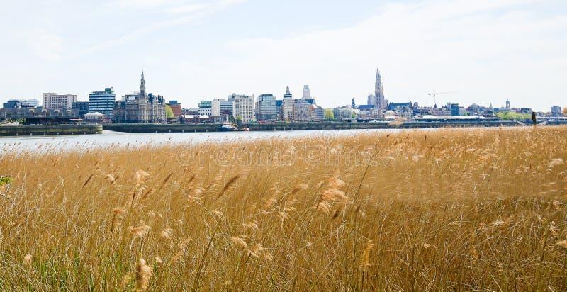 Vista su Anversa dal fiume la Schelda in Fiandre, Belgio fotografia stock