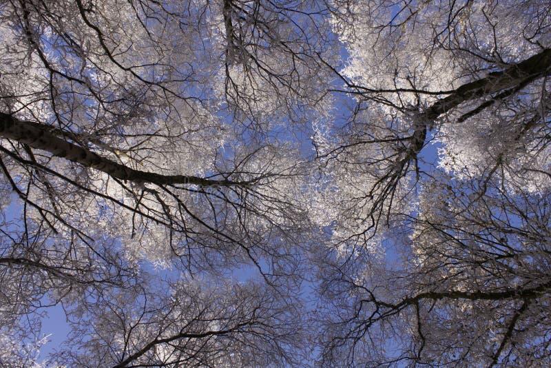 Vista su attraverso i rami di albero nel metà di inverno con neve sui rami fotografie stock