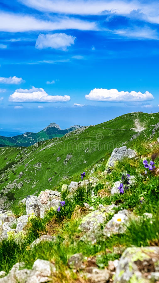 Vista su Giewont a Tatras ad ovest polacco di estate immagini stock