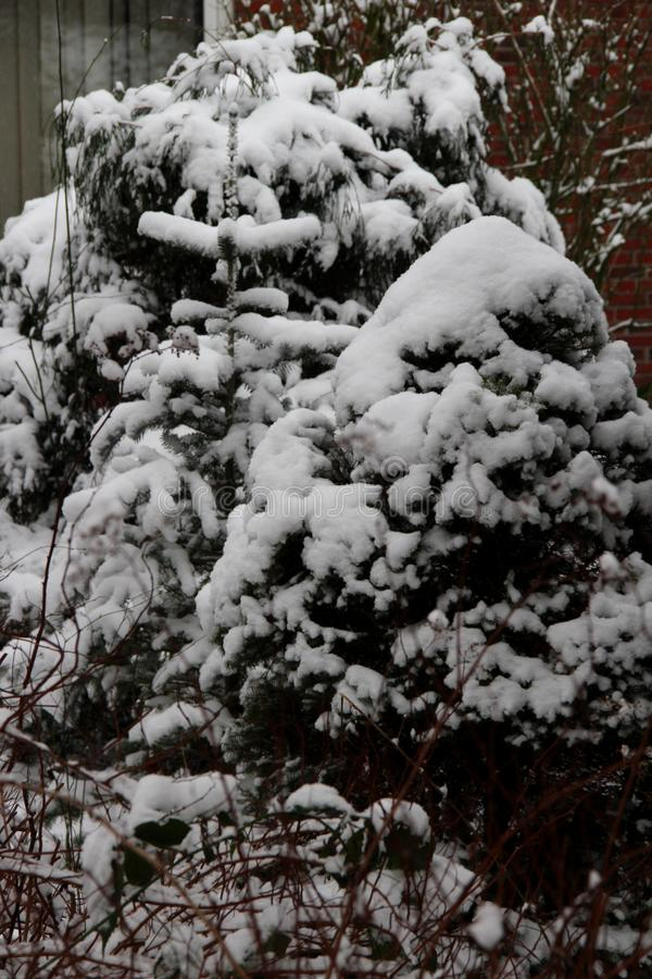 Vista su un arbusto nel giardino pieno con neve un giorno di inverno freddo nel emsland Germania del distretto fotografia stock libera da diritti