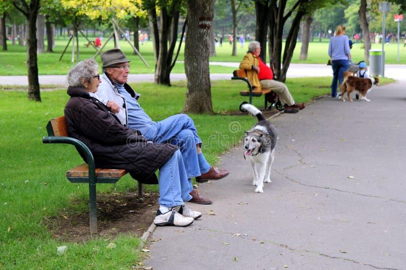 Vista su un parco con gli anziani che si siedono su un banco e sui cani di camminata fotografia stock libera da diritti