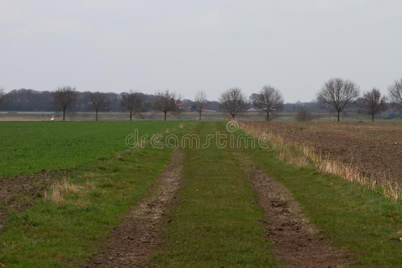 Vista su un percorso naturale fra la terra coltivata nel emsland Germania del rhede fotografie stock libere da diritti