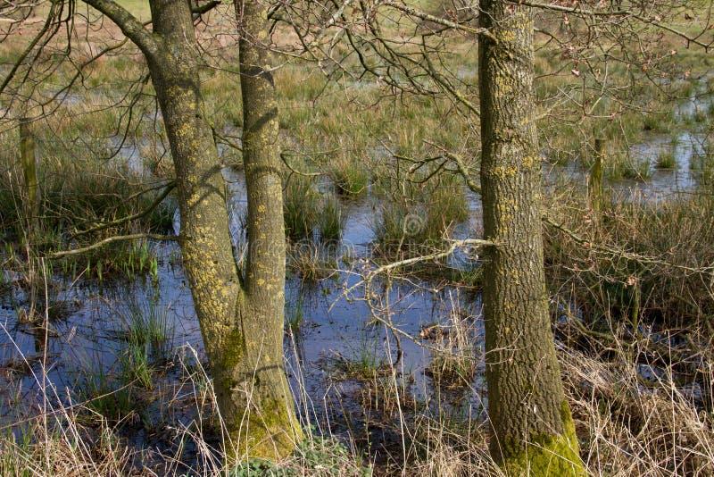 Vista su un poco stagno su una terra coltivata nel emsland Germania del rhede immagine stock