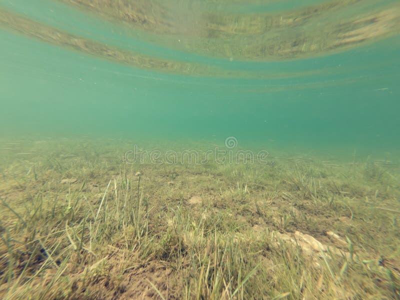 Vista subacquea del lago cristallino della foresta immagini stock