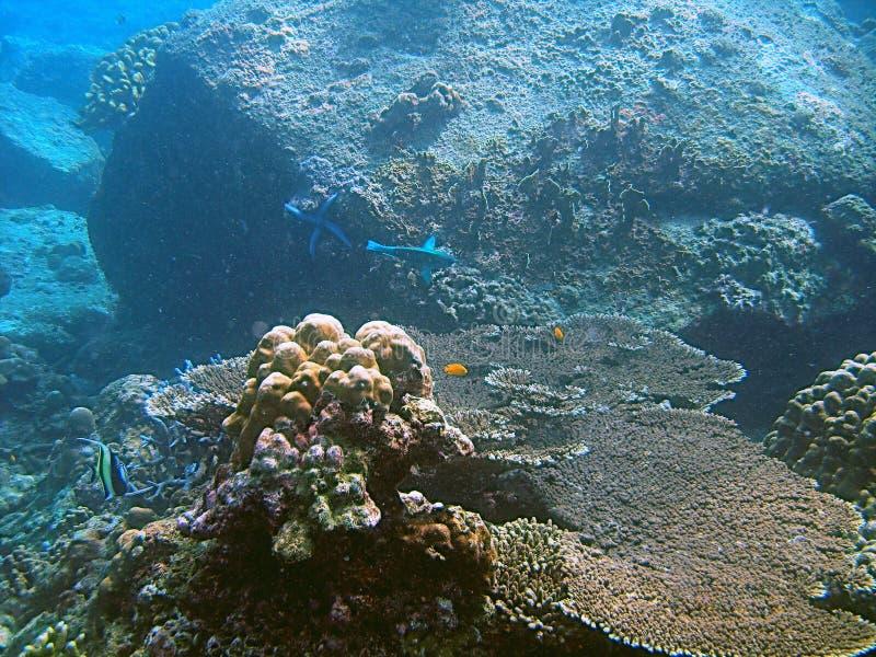 Vista subaquática do recife coral imagem de stock royalty free