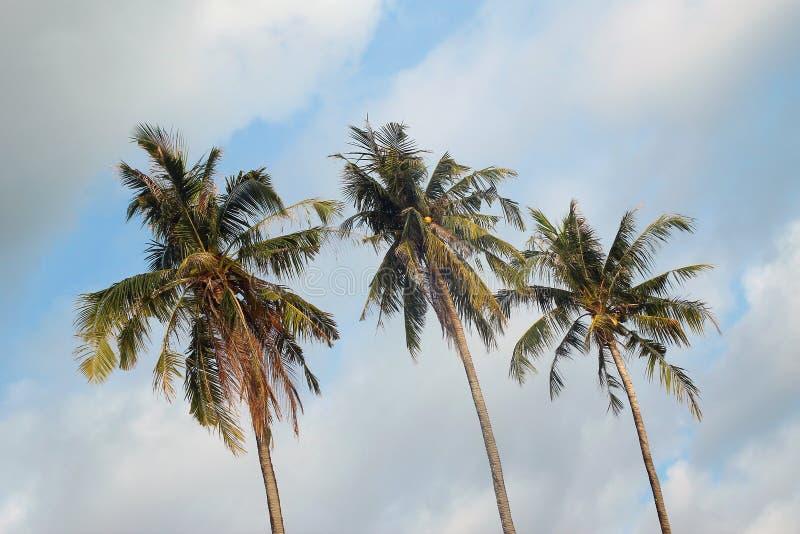 Vista sugli alberi del cocco su un fondo di un cielo nuvoloso blu immagine stock