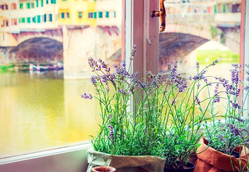 Vista sul Arno fotografie stock libere da diritti