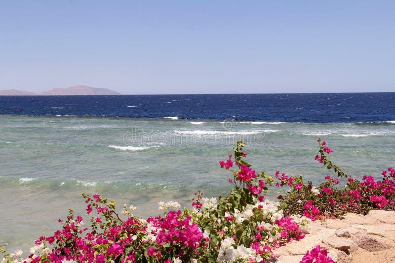Vista sul mare con i fiori luminosi nella priorità alta fotografia stock