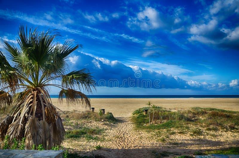 Vista sul mare con la spiaggia e le palme fotografie stock libere da diritti