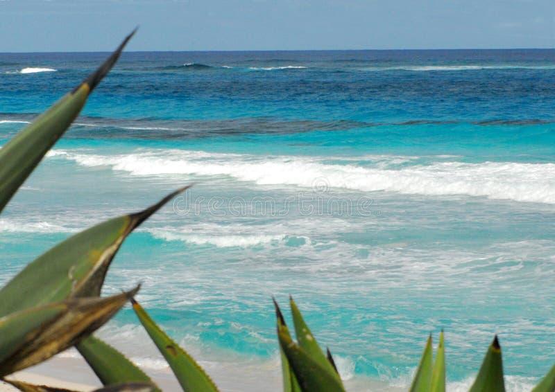 Vista sul mare e spiaggia delle Bahamas con il cactus immagini stock