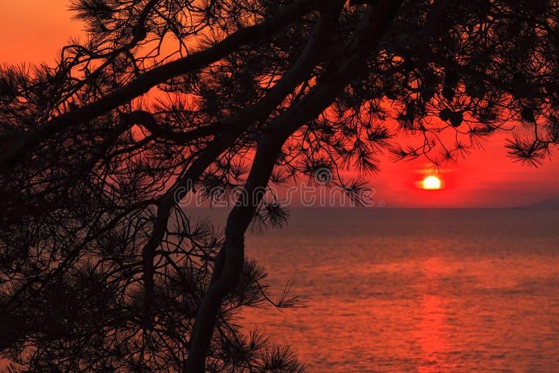 Vista sul mare scenica di tramonto del mare con gli aghi del pino sulla priorità alta Costa di Mar Nero, Russia fotografie stock