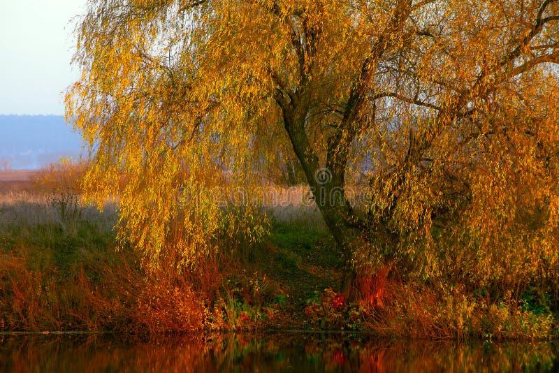 Vista sul paesaggio di autunno del fiume e degli alberi nel giorno soleggiato fotografia stock libera da diritti