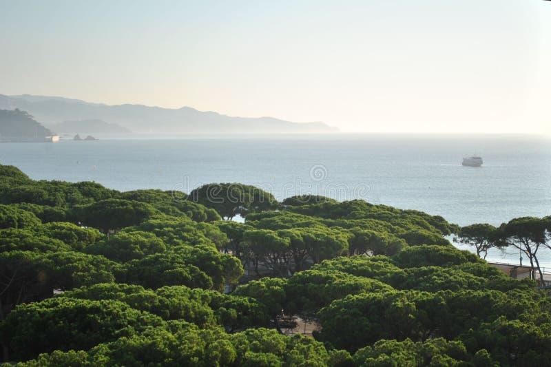 Vista sull'abetaia e sul mar Mediterraneo immagine stock