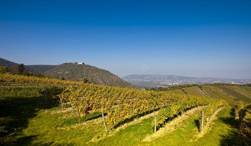 Vista sulla chiesa di Leopoldsberg e sul Danubio da un'iarda viennese del vino immagini stock libere da diritti