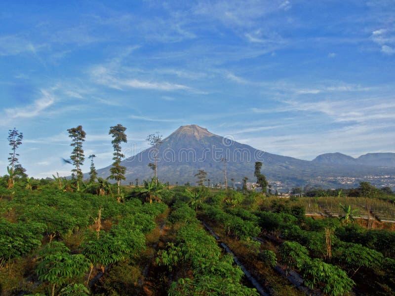 Vista sulla natura a Temanggung, Java centrale, Indonesia fotografia stock libera da diritti