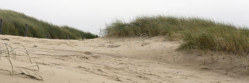 Vista sulle dune e sullo sparto pungente nella zona costiera alla costa ovest dei Paesi Bassi immagini stock