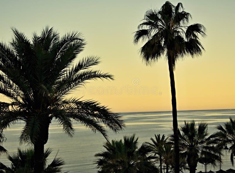 Vista sulle palme fotografia stock libera da diritti