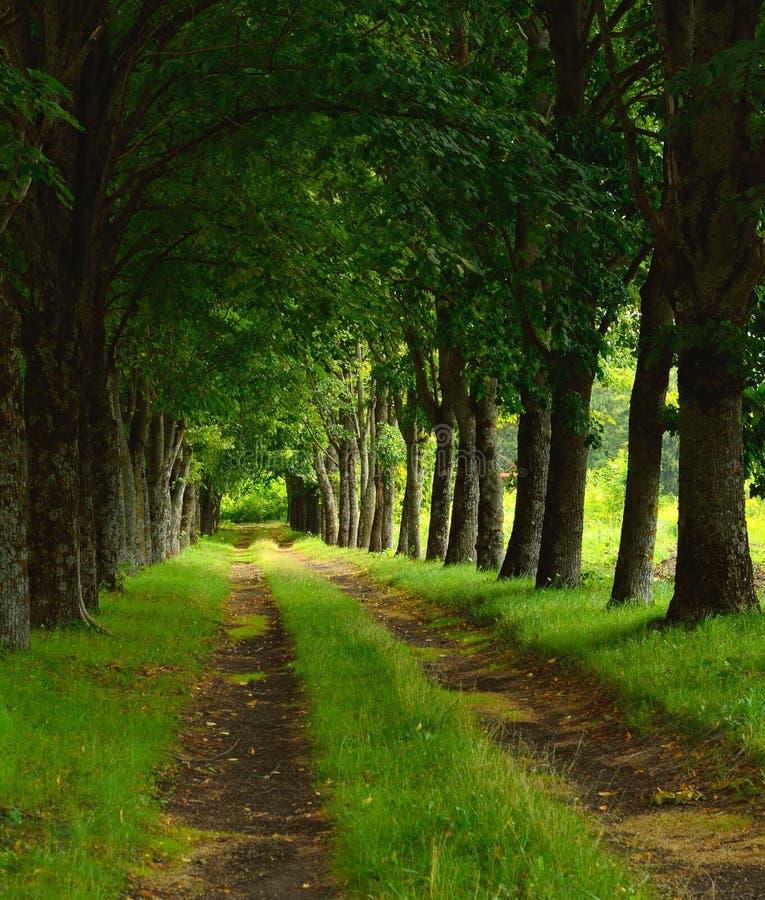 Download Vista stock illustration. Image of tree, nature, life - 33908234