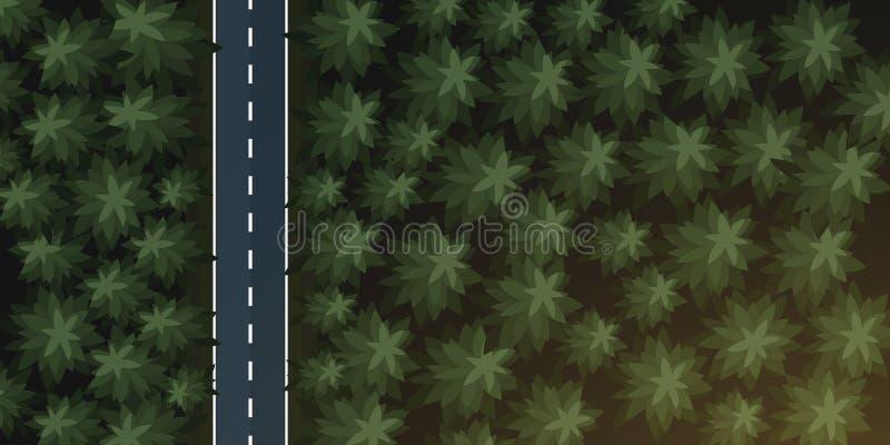 Vista superior aérea da floresta e da estrada