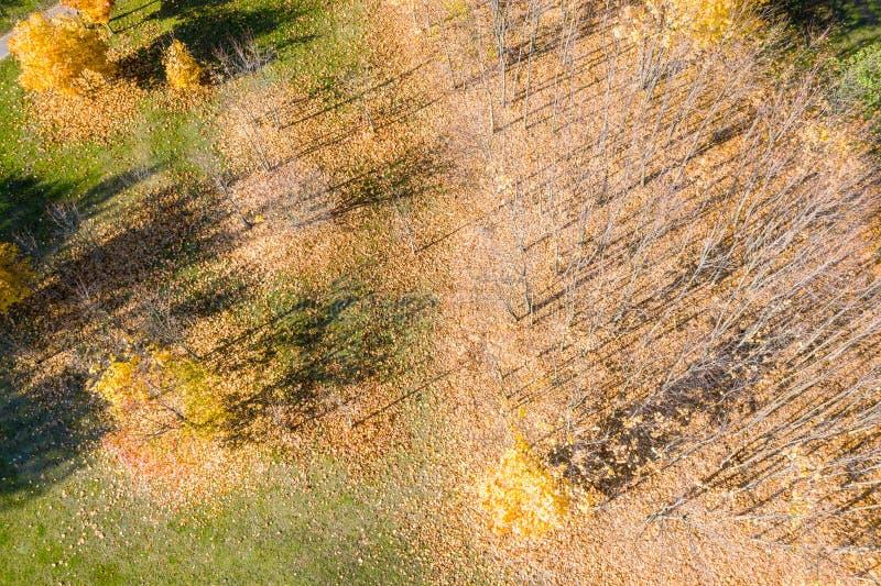 Vista superior aérea de las siluetas de los árboles de la sombra en la tierra del parque foto de archivo