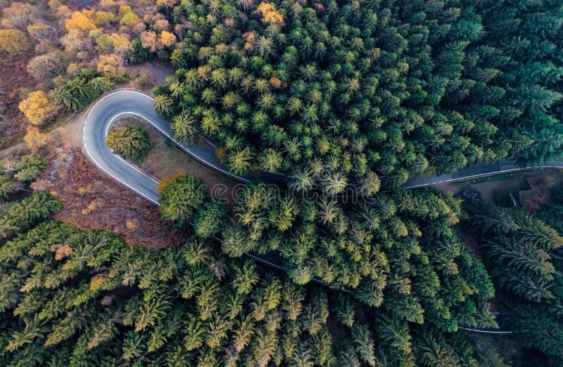 Vista superior aérea aérea sobre a curvatura da estrada da volta do gancho de cabelo no forestFall alaranjado, árvore verde, amar fotografia de stock royalty free