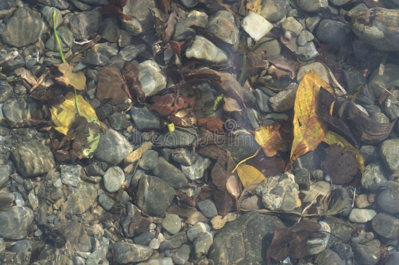Vista superior da cama de rio dos seixos atrav?s da ?gua clara fotos de stock