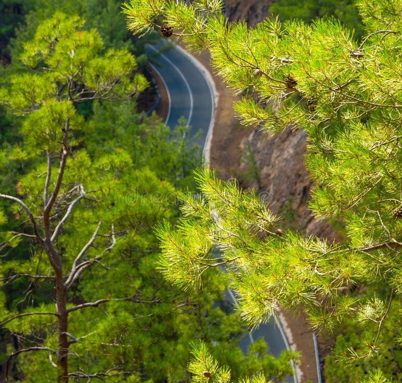 Vista superior da estrada asfaltada através dos pinheiros, Chipre fotografia de stock royalty free