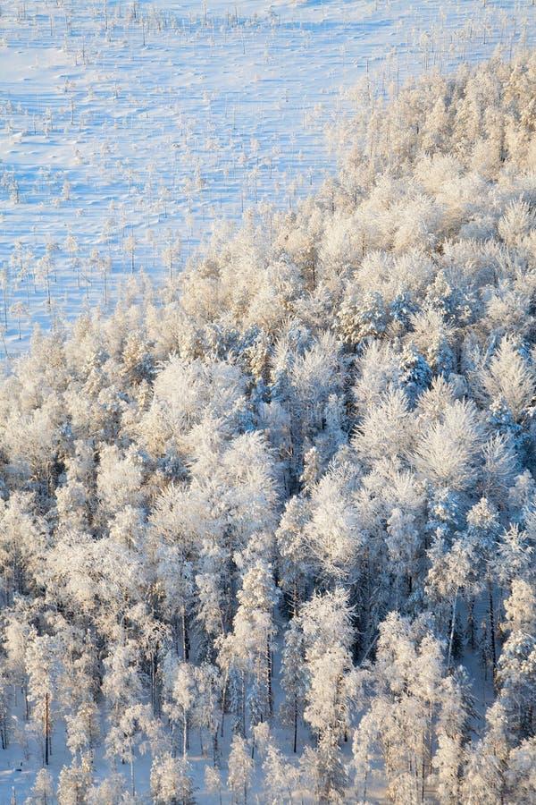 Vista superior das árvores na geada fotos de stock royalty free