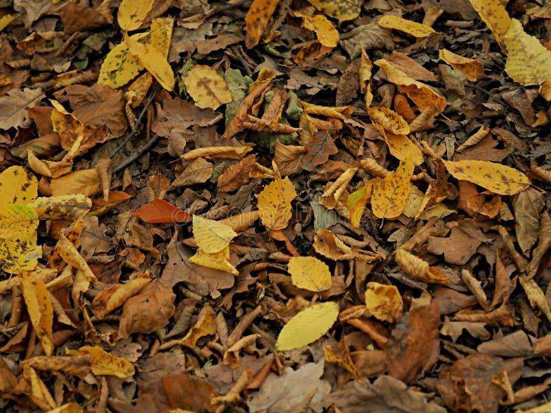 Vista superior das folhas de outono coloridas que encontram-se na terra foto de stock royalty free