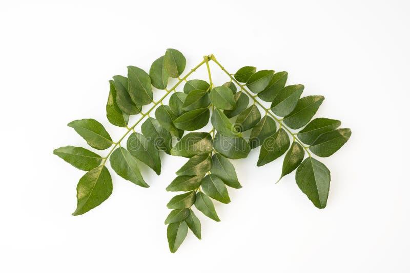 Vista superior das folhas verdes frescas do caril isoladas no fundo branco imagens de stock royalty free