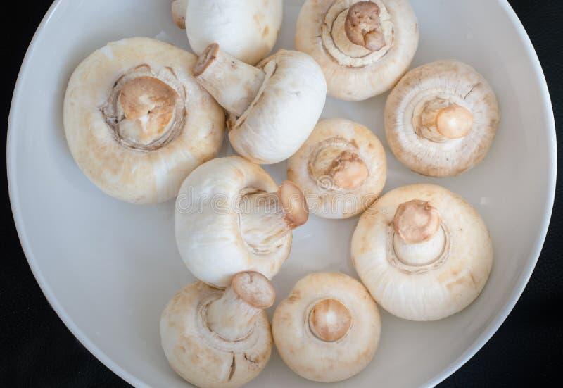 Vista superior de cogumelos frescos fotos de stock royalty free