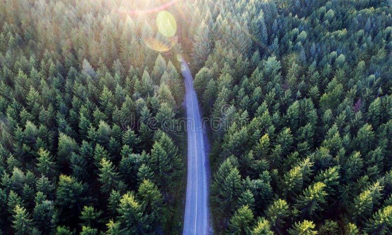 Vista superior de escuro - paisagem verde da floresta no inverno Cena a?rea da natureza dos pinheiros e da estrada asfaltada fotografia de stock