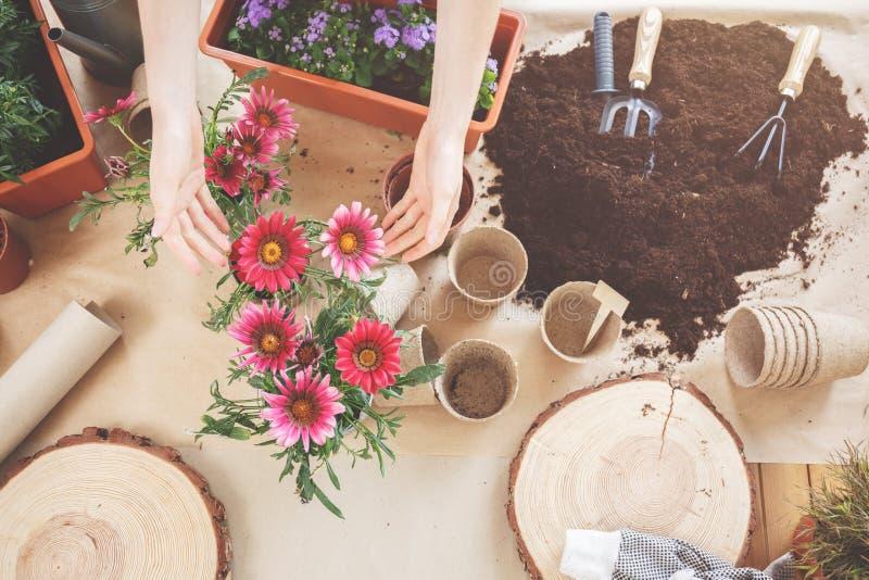 Vista superior de flores bonitas fotos de stock
