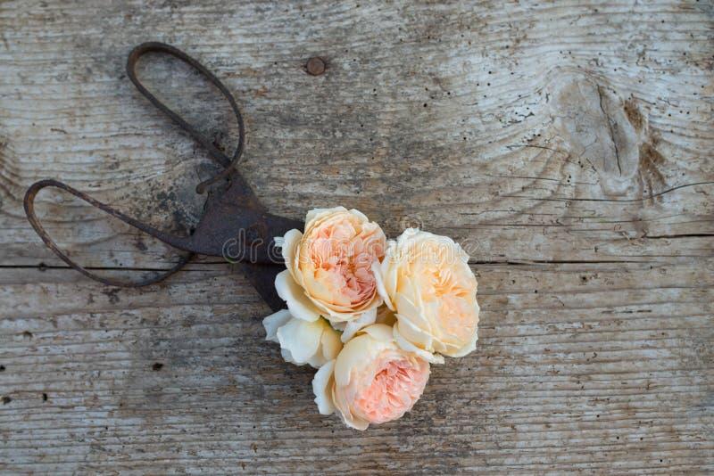 Vista superior de flores y de tijeras viejas en piso de madera imágenes de archivo libres de regalías