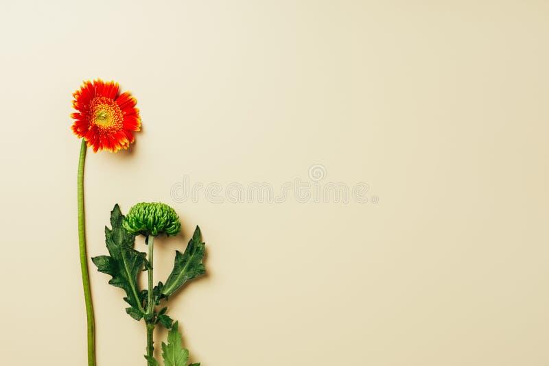 vista superior de las flores del gerbera y del crisantemo imágenes de archivo libres de regalías