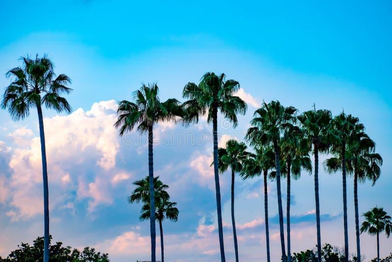 Vista superior de palmeras en fondo azul claro nublado del cielo en Citywalk en el ?rea 1 de Universal Studios imágenes de archivo libres de regalías