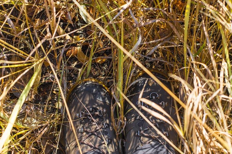 Vista superior de uma bota de caminhada na grama e na folha do outono imagem de stock royalty free