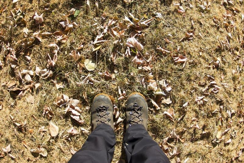 Vista superior de uma bota de caminhada na grama e na folha do outono imagem de stock