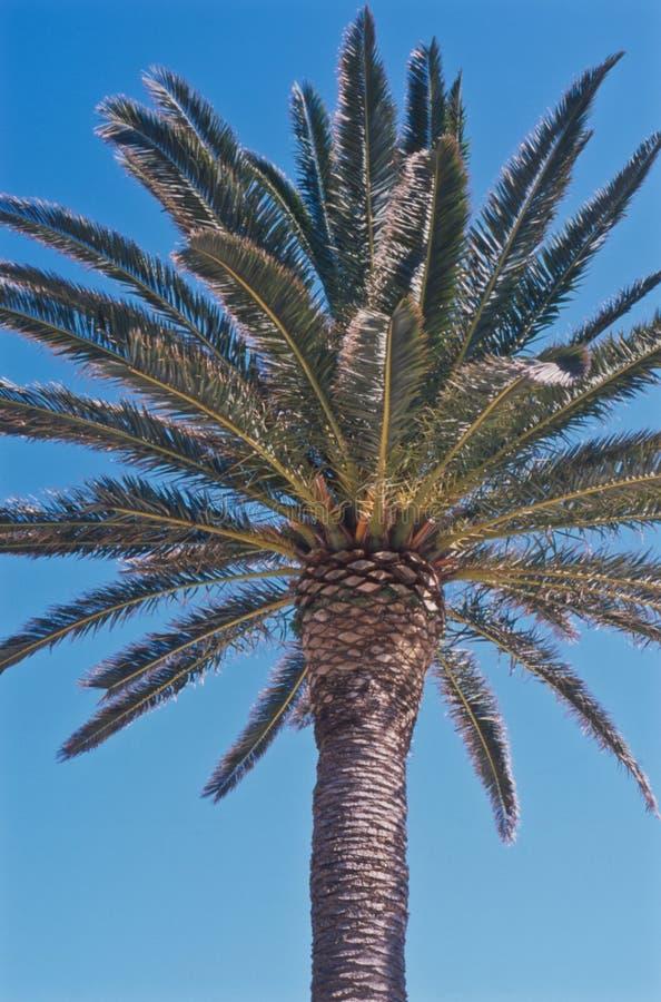 Vista superior de uma palmeira no sol fotos de stock royalty free