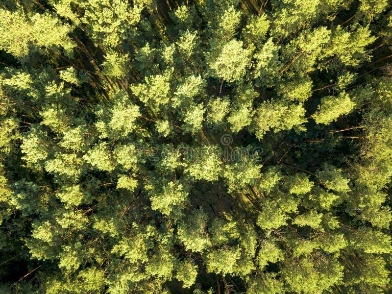 Vista superior de un bosque de hojas caducas del verano en un d?a de verano claro Visión aérea con el dron como fondo natural del imagen de archivo