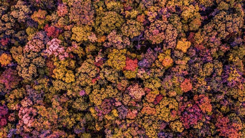 Vista superior del bosque de otoño, para fondo fotografía de archivo libre de regalías
